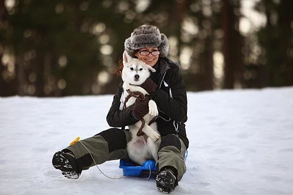 dog on sled
