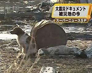 Tsunami Dogs