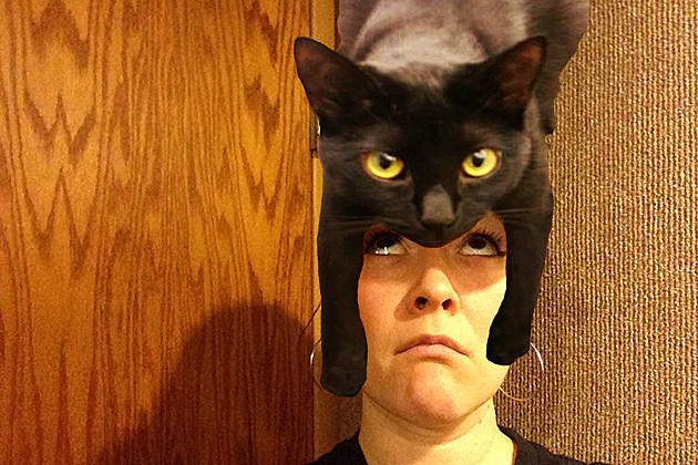 weird cat haircuts