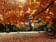 Brooklyn's Prospect Park Awash In Fall Foliage